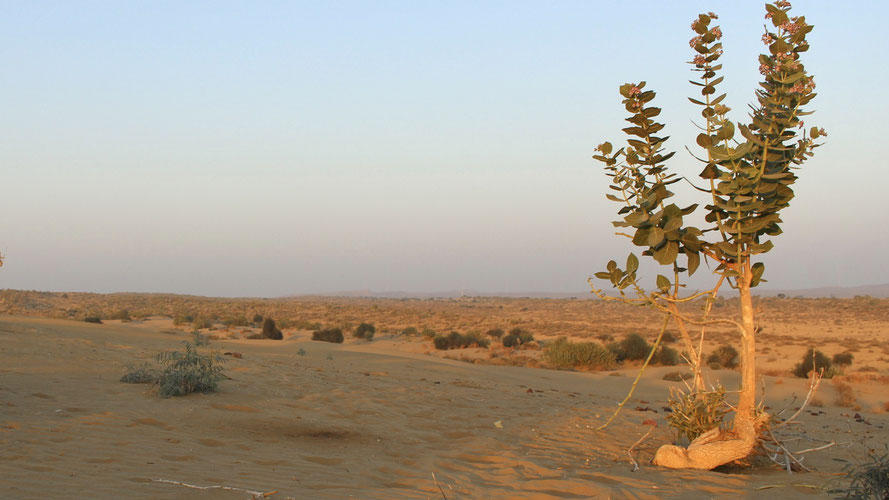 desert tree and landscape