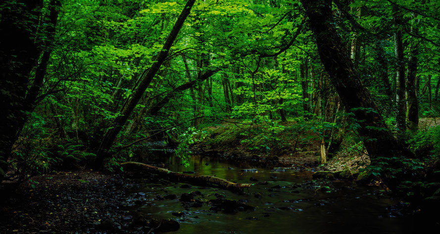 Bild: Wald, Tintern Abbey, Irland, Vlevia 50, 4x5, analog, Trommelscan mit Trommelscanner, Fotograf Sebastian Dziuba, Drumscanner, Drumscan, Digitalisierung Dia, Large Format