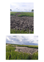 Photos des lieux avant moisson