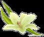 Orchidee 4 • Hypnose • Mentaltraining • Raucherentwöhnung • Sporthypnose in Heidelberg • Weinheim • Mannheim • Saarlouis • Rauchentwöhnung • Nichtraucher werden mit Hypnose