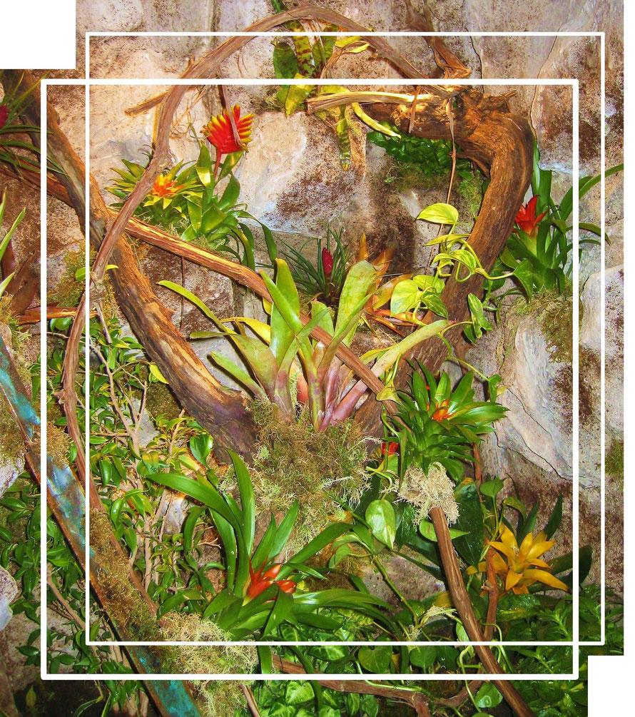 Tropenterrarium mit lebender Bepflanzung