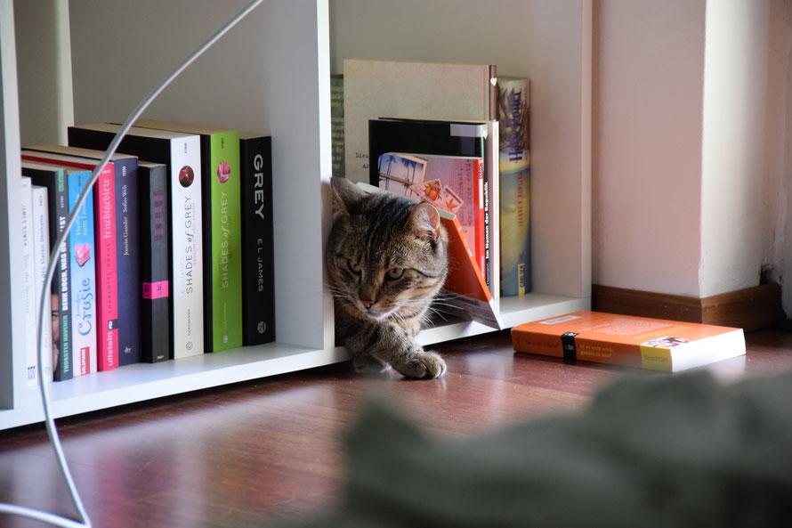 """""""Da schmeißt man das eine Buch raus und schon fallt einem das andere auf den Kopf - so ein Blödsinn."""""""