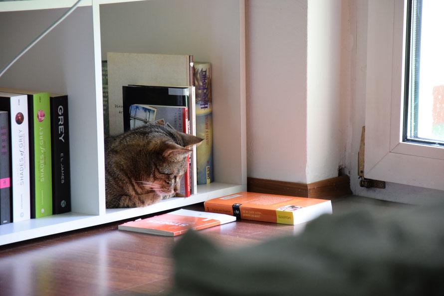 """""""Jetzt hab ich ein bisschen mehr Platz. Hm wer liest denn da ein Stress-Buch? Also ich hab keinen Stress."""""""
