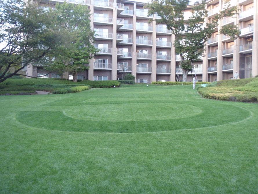 2010年10月27日 芝生文字 5  文字を表現 ケンタッキーブルグラス