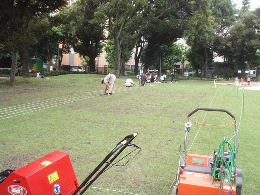 2010年07月05日 目白台運動公園挿し苗補修  ティフトン419の挿し苗作業中