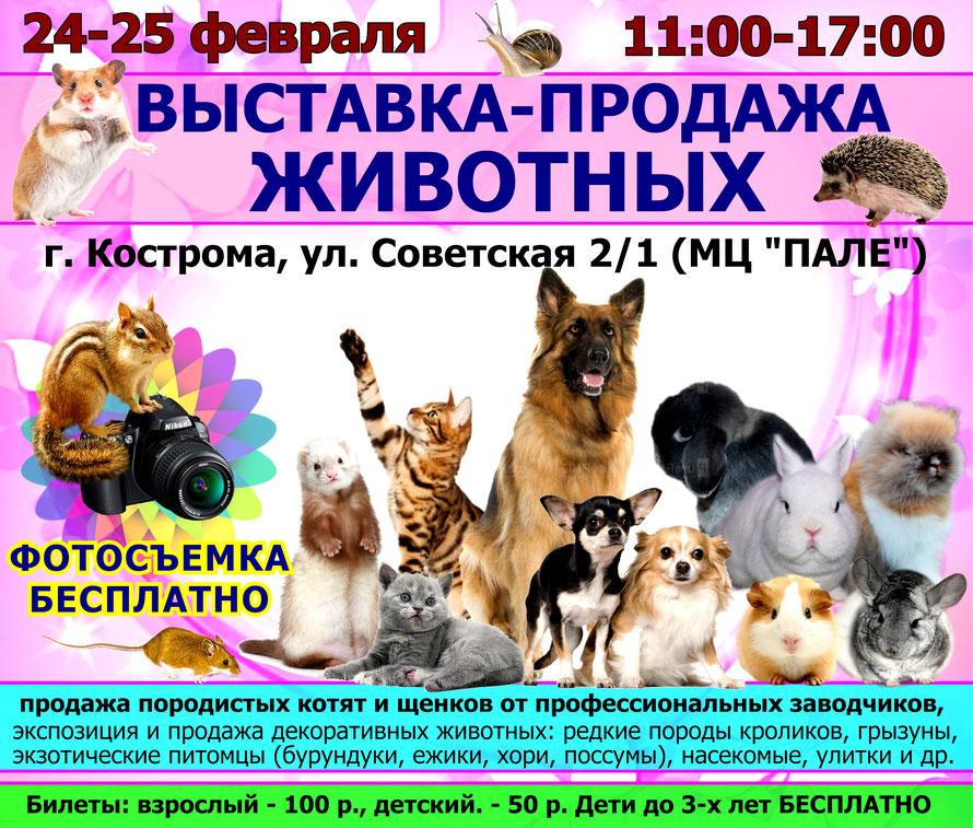 выставка-животных