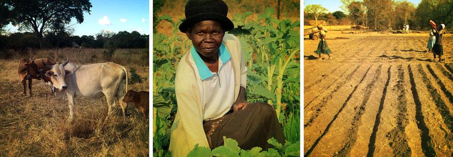Jafuta Foundation - Community - Agricultural assistance - Zimbabwe