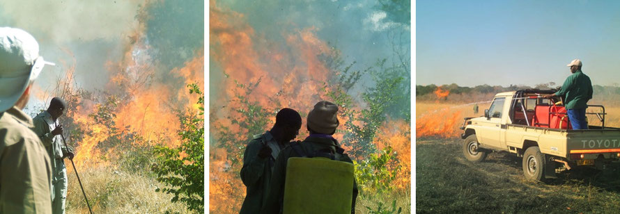 Jafuta Foundation - Wildlife & Conservation - Fire prevention - Zimbabwe