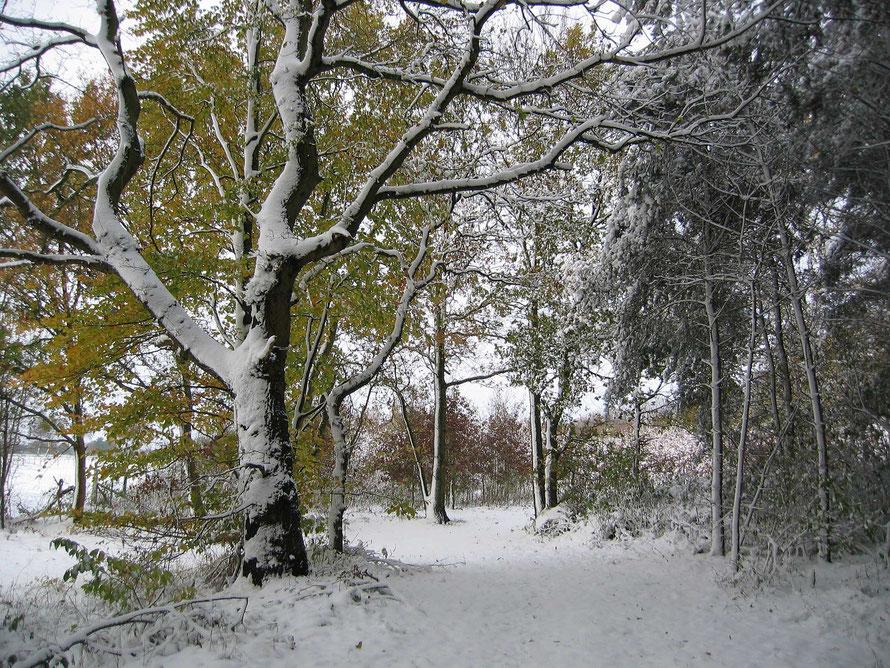 Streitheide im Schnee