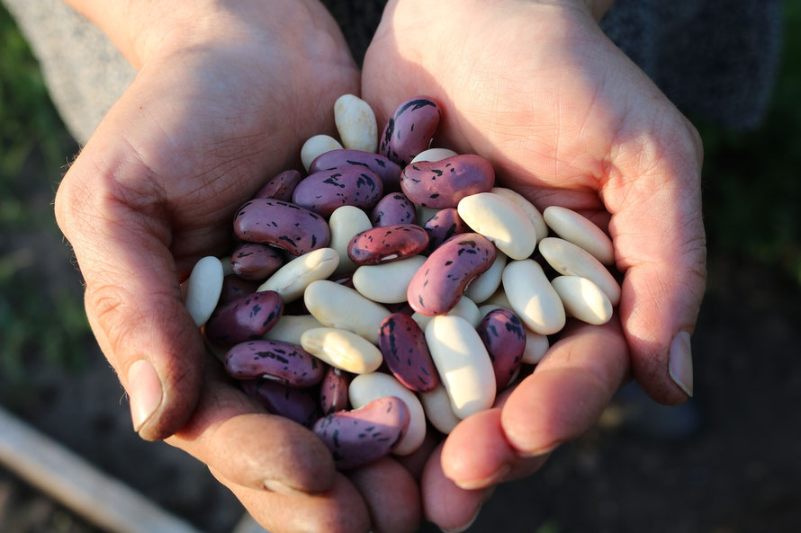 Easy beans, weight management friendly