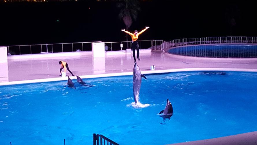 イルカのショー 感動!