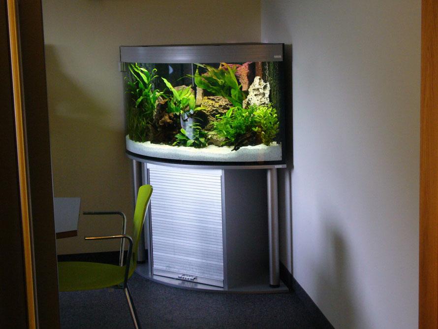 """Ein Komplettaquarium """"Trigon"""" in einem Besprechungsraum, ca. 300l"""