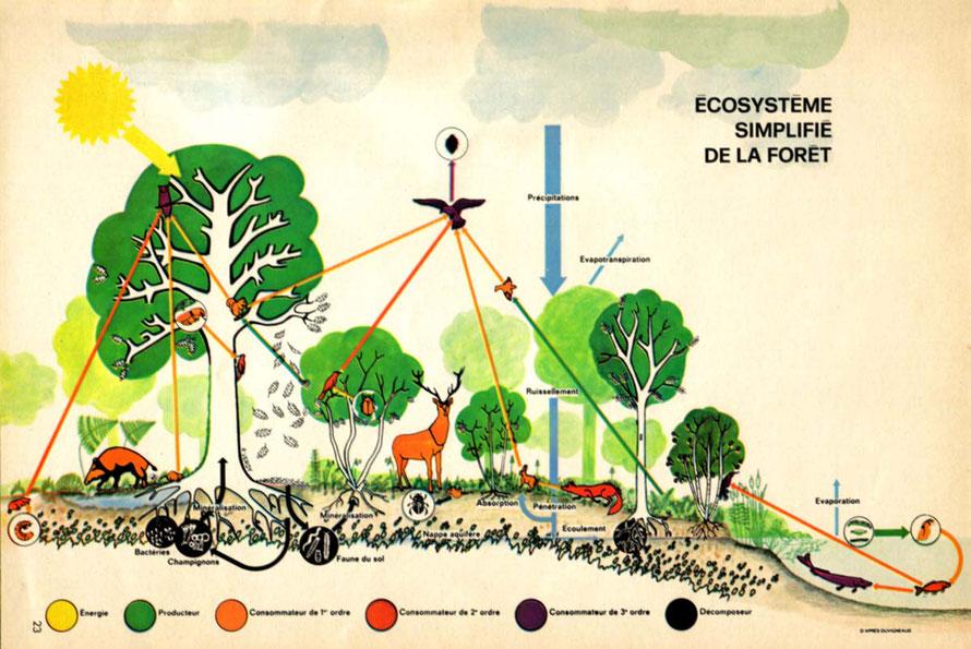 201 Quentend On Par écosystème Forestier Quel Est Son