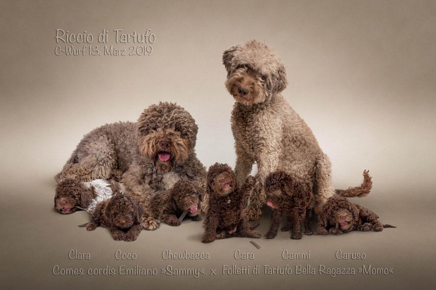 Familienphoto Comes cordis Emiliano »Sammy«  x  Folletti di Tartufo Bella Ragazza »Momo« aus der Zuchtstätte Riccio di Tartufo