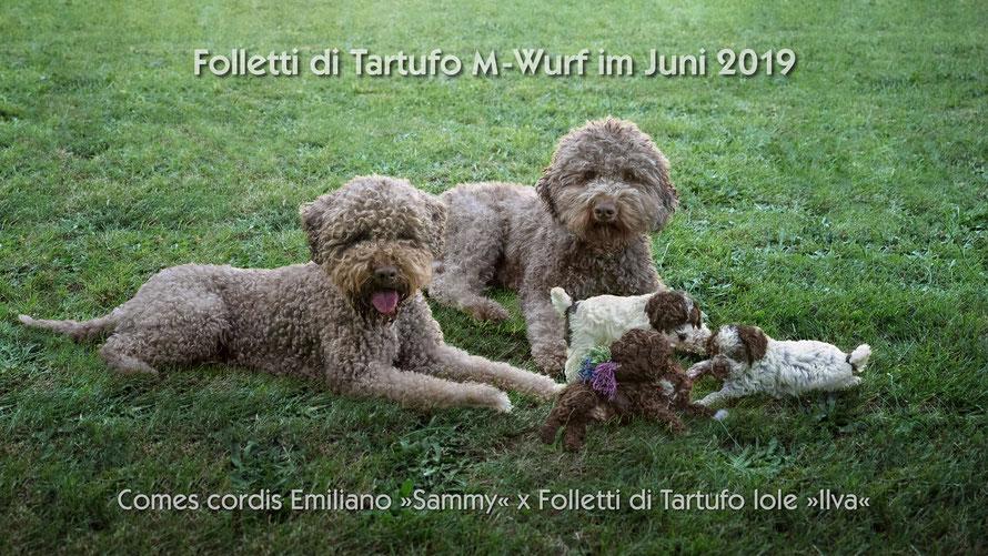 Familienphoto Comes cordis Emiliano »Sammy«  x  Folletti di Tartufo Iole »Ilva«