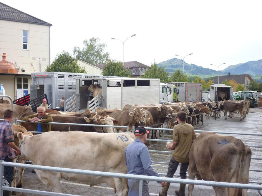 Appenzell, Viehmarkt, Kanton Appenzell Innerrhoden © Kunstwirtschaftler