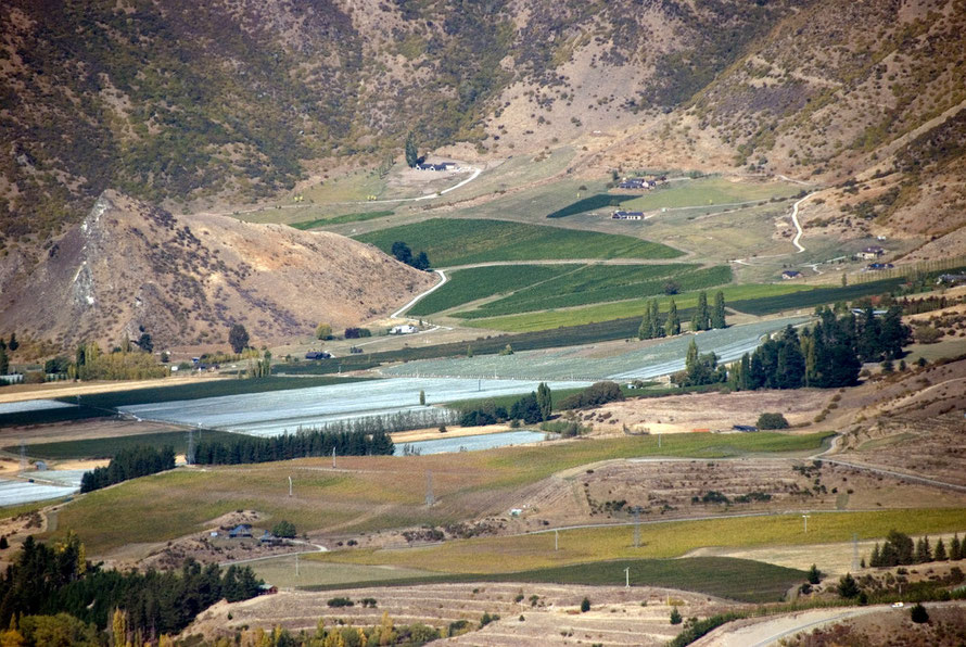 Intensive agriculture in the Kawarau River valley, Central Otago.
