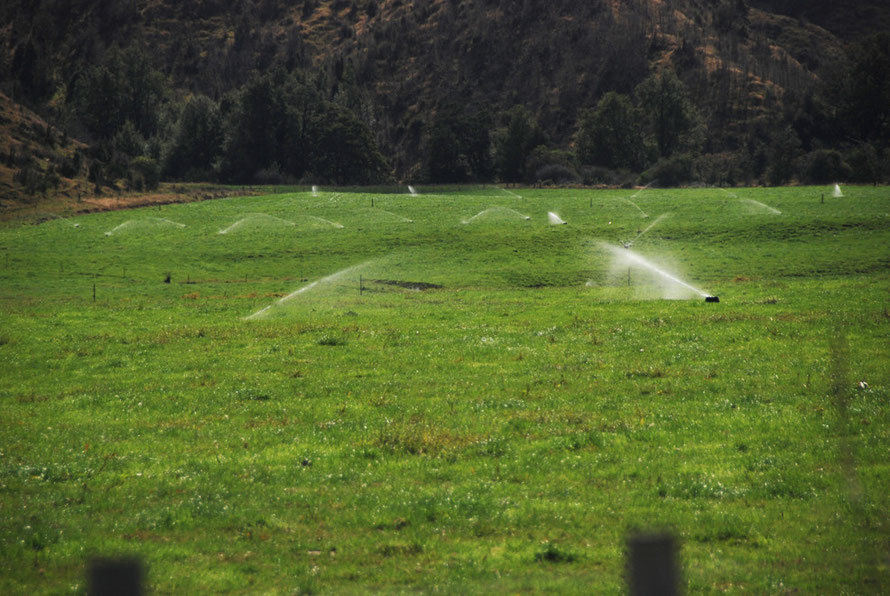 Water and plenty of fertilizer makes New Zealand grass-green in the Buller Valley