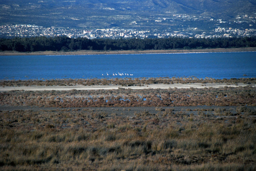Group of flamingos and mass on far shore of Akrotiri salt alke, January, 2013.