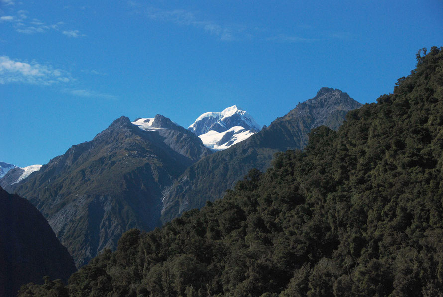 Mt Tasman and high level mature rain forest seen from Fox Glacier Village