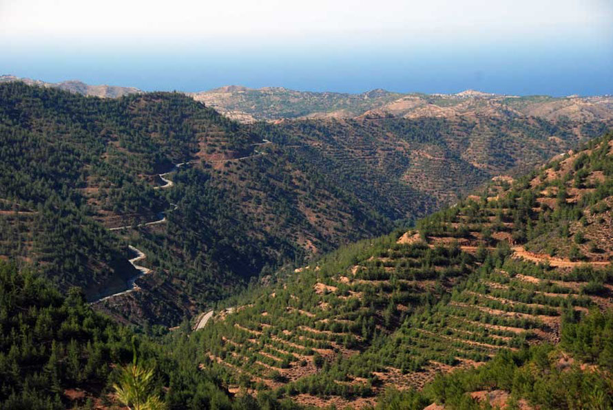 Regenerated Brutia forest on machine made terracing below Kampos. the road to Kato Pyrgos snaking away on the far valley side and sea in distance