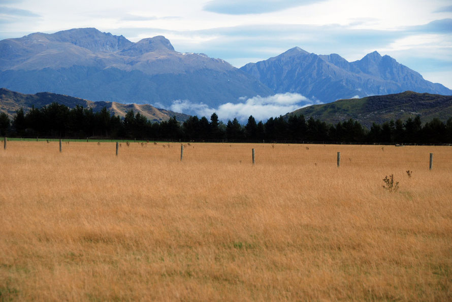 More golden paddocks, pines and moutains in the Waiau valley, Southland.