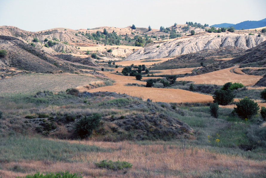 The upper limits of the Mesoria between Arediou and Tamassos: wheat fields in dry marl hills and kafkalia (May, 2012).