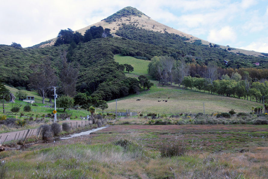 Scotts Hill on the northern side of Hoopers Inlet on the Otago Peninsula