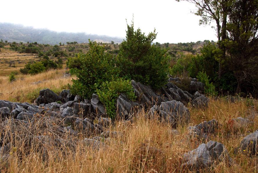 t Caanan Downs at the top of Takaka Hill