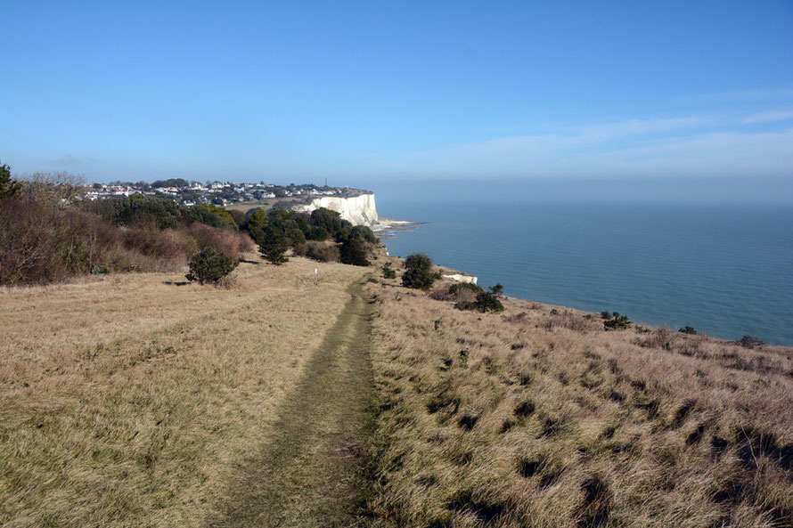 Apogee of winter/intimations of spring on Windmill Down, St Margaret's Bay.