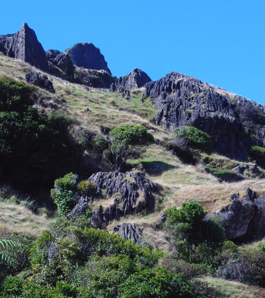 This karst landscape on the bluff to the north of the Puturau shows an earlier stage of karst formation. Rinnenkarren (runnels) are visible on the partly unmantled limestone at the bottom of the photo