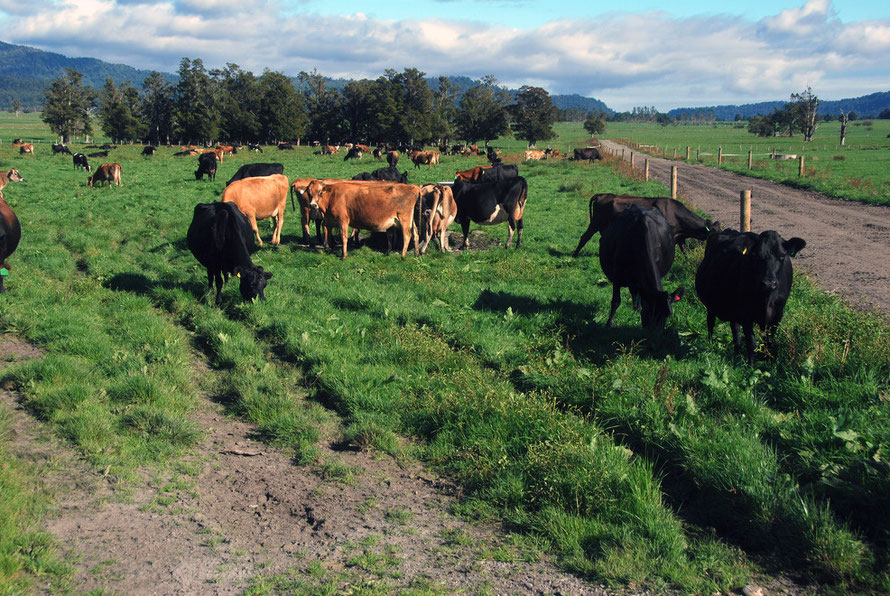 How green was my valley: cadmium lvels in New Zealand dairy pastures may be four times the background level