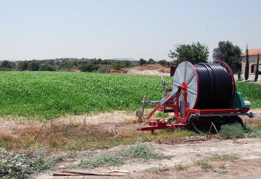 Irrigated fodder crop, near Mari