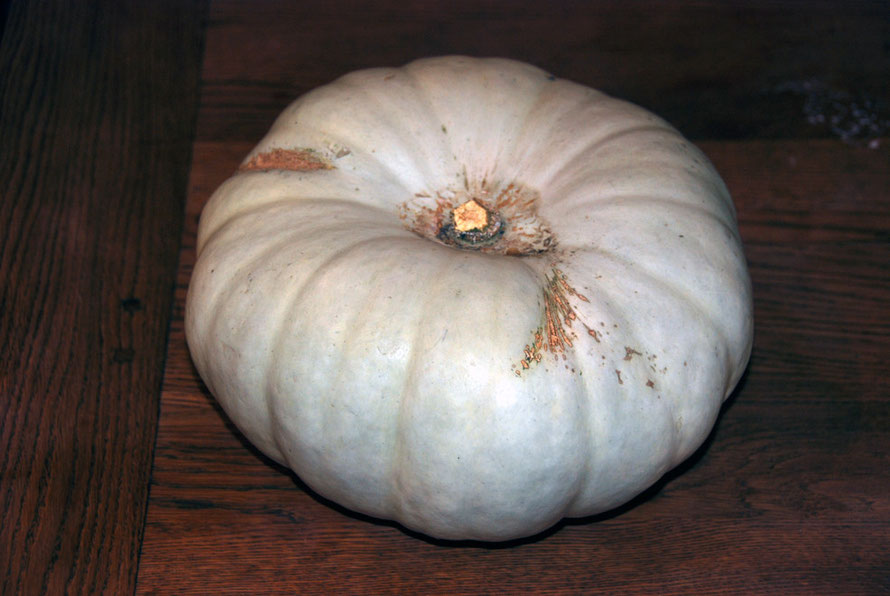 Climate change on one allotment: Butternut Autumn Crown Squash
