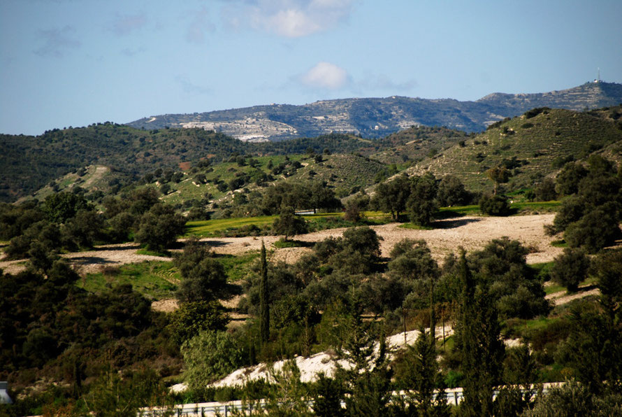 Looking up to the marl foothills of the Troodos with carob and olive trees and Makarios Earth Satellite Station in upper right, near Kofinou, January 2013