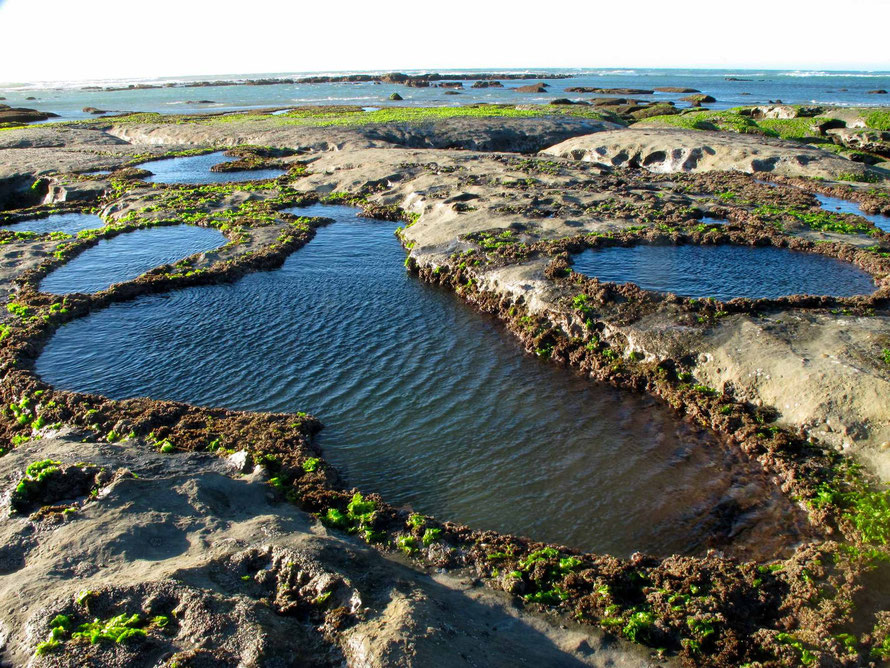 Limestone rock pools  at Paturau Beach (Courtesy of http://nzfrenzysouth.files.wordpress.com/2013/ - click for link)