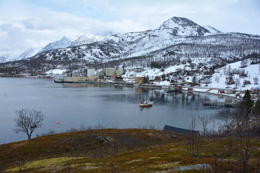 Sub-arctic tundra-vegetation above the sheltered bay of Jovik with its fish jetties and oil tanks for an old fishmeal factory and the southerly Lyngen Alps behind.