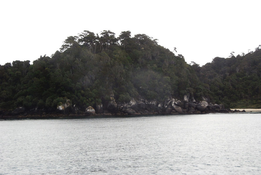 Splendid podocarp forest at Bragg Point on Stewart Island. Dead Man Beach is on the far right.