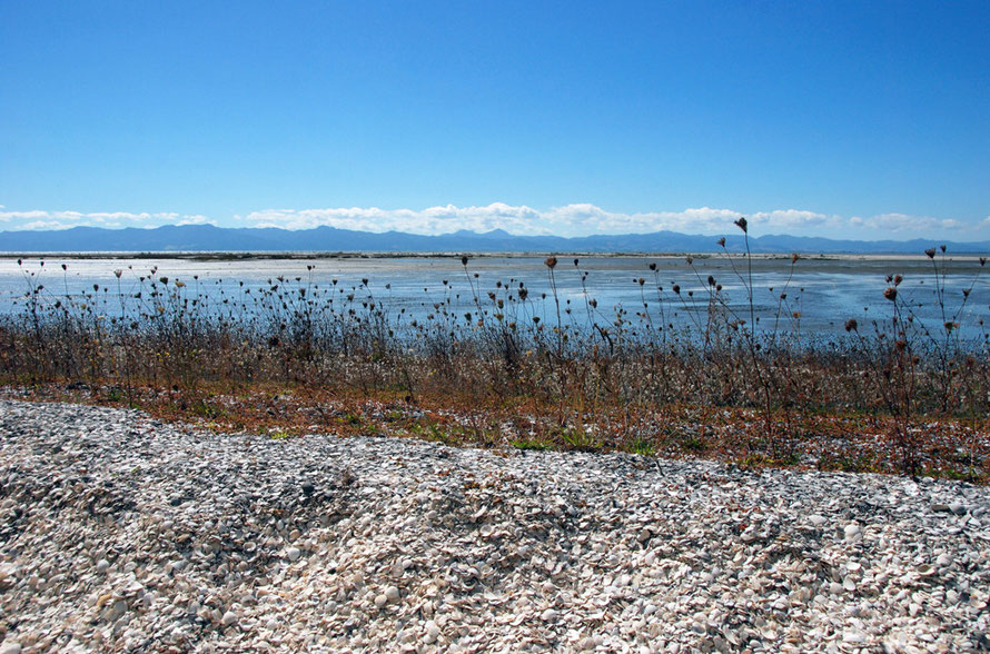 One of the shell banks of the Miranda Chenier Plain with mudflats and the mountains of the Coromandel Peninsula beyond.