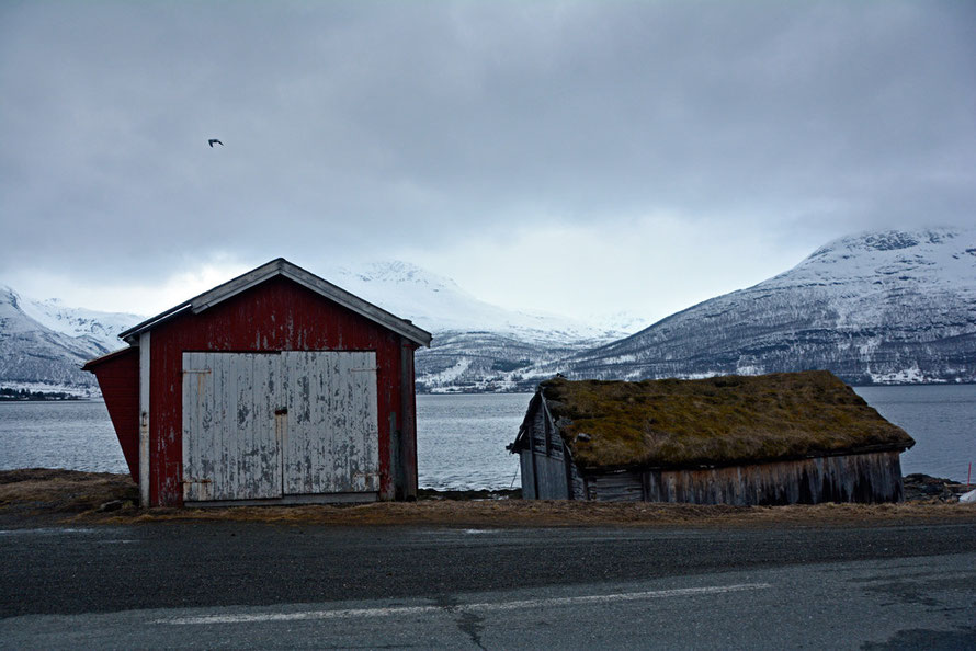 Sørfjorden decaying wooden shore buildings, one with a traditional turf roof (with attendant Oyster Catcher) on the long road to Jøvik on Troms county, Northern Norway.