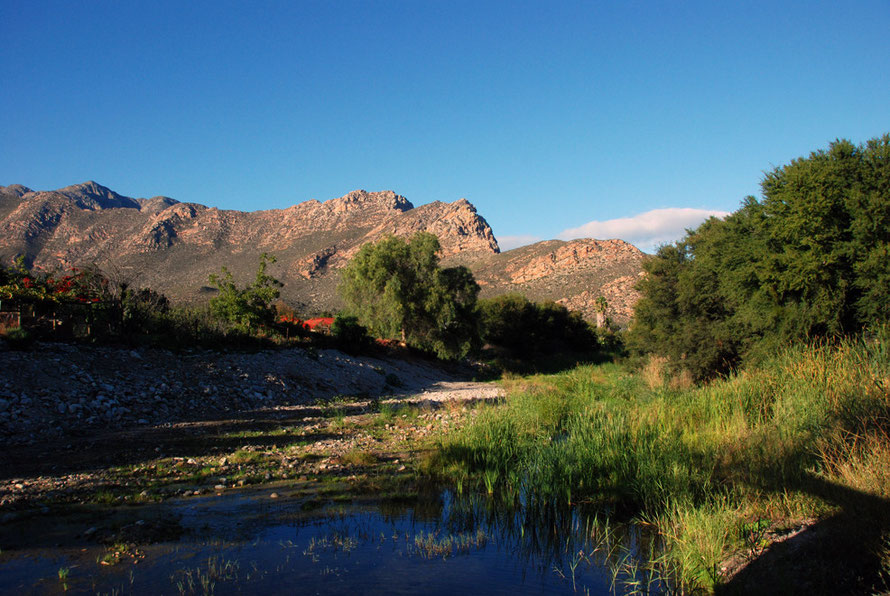 Reeds, river and the Langberg Mountains, Montagu