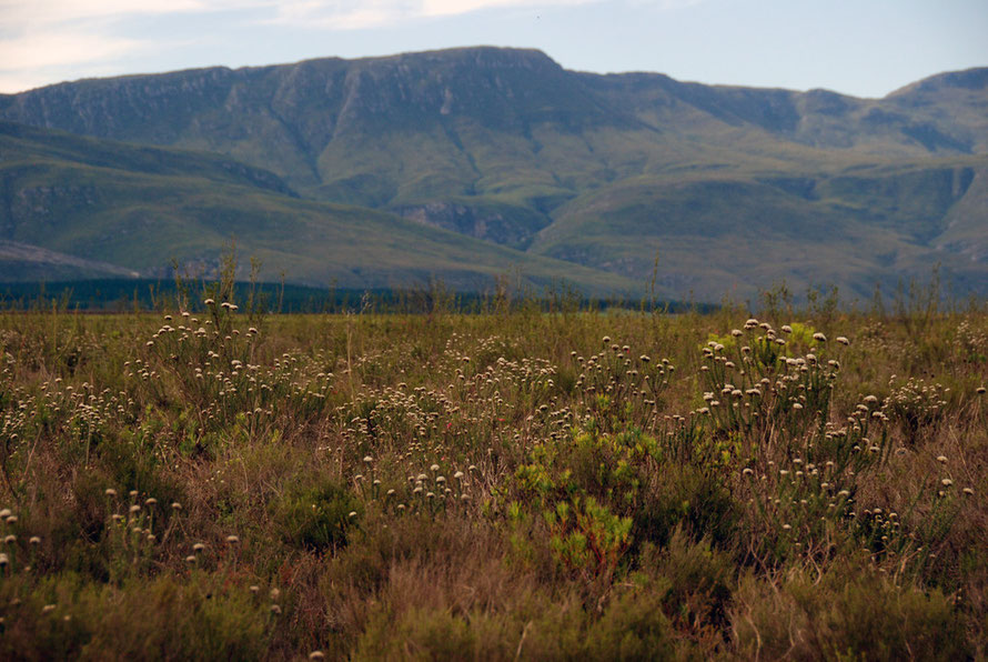 Breede shale renostoveld at Bontebok National Park