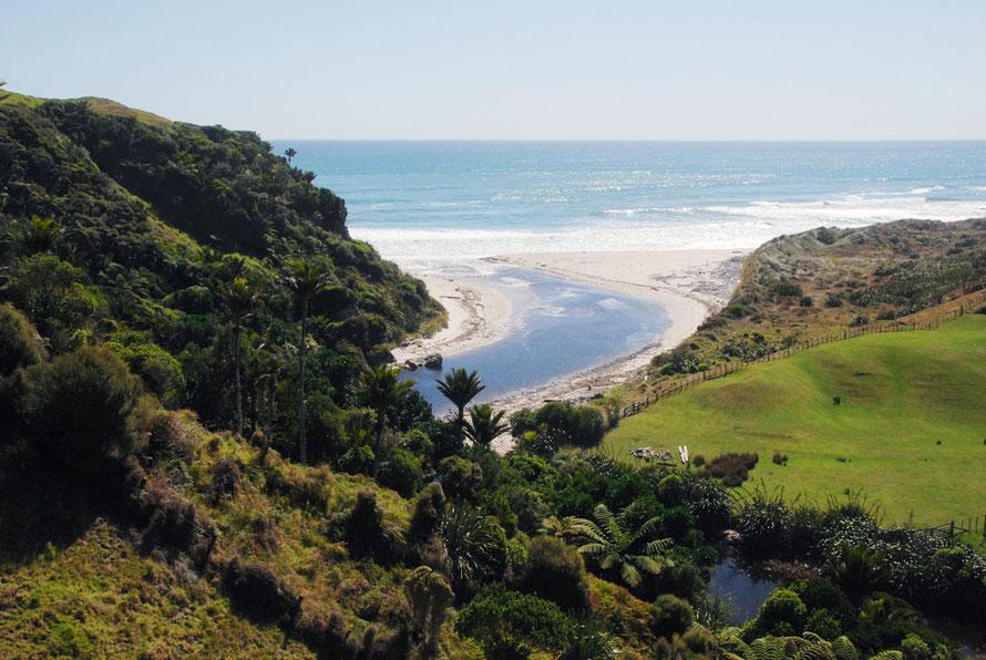 Remnant bush of trees ferns, nikau palm and kraka pullulate in the translucent, limpid light of the Tasman Sea.