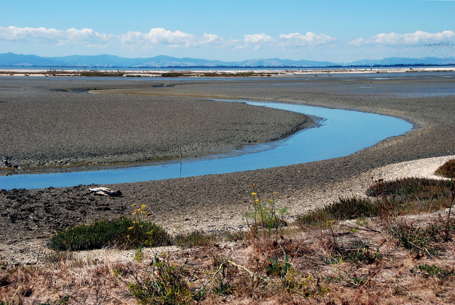 Mudflats at Miranda/Pukorokoro embayed by the brilliant white shell bank in the distance and beyond the flat tree line of the Hauraki Plains and the hills of Coromandel Range