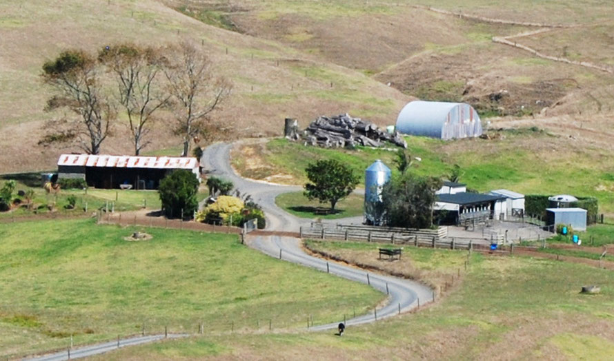 Milking parlour in the sandhills of Awhitu south west of Auckland.