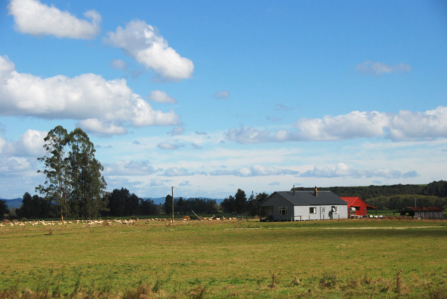 Farm under open skies on the Reefton road.