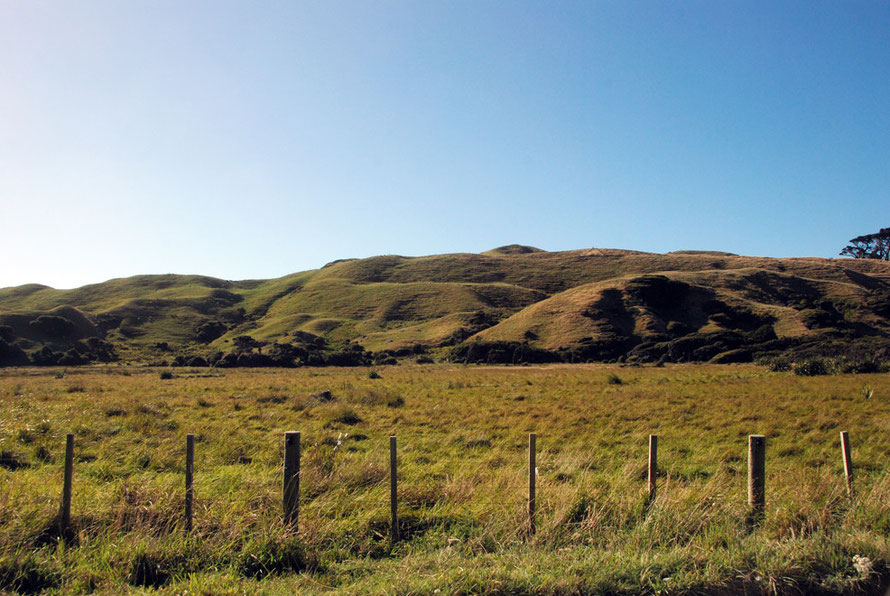The grass-covered sand-blwon hills near the Whararariki turn off, Golden Bay.