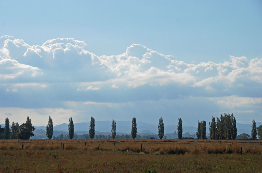 Paddocks, poplars and clouds on the Hauraki Plains.