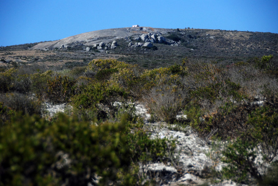 Saldanha Granite Fynbos in the West Coast National Park