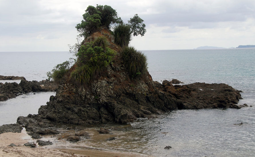 A rock pinnacle covered with epiphytes at Quarry Point near Kuoatunu.